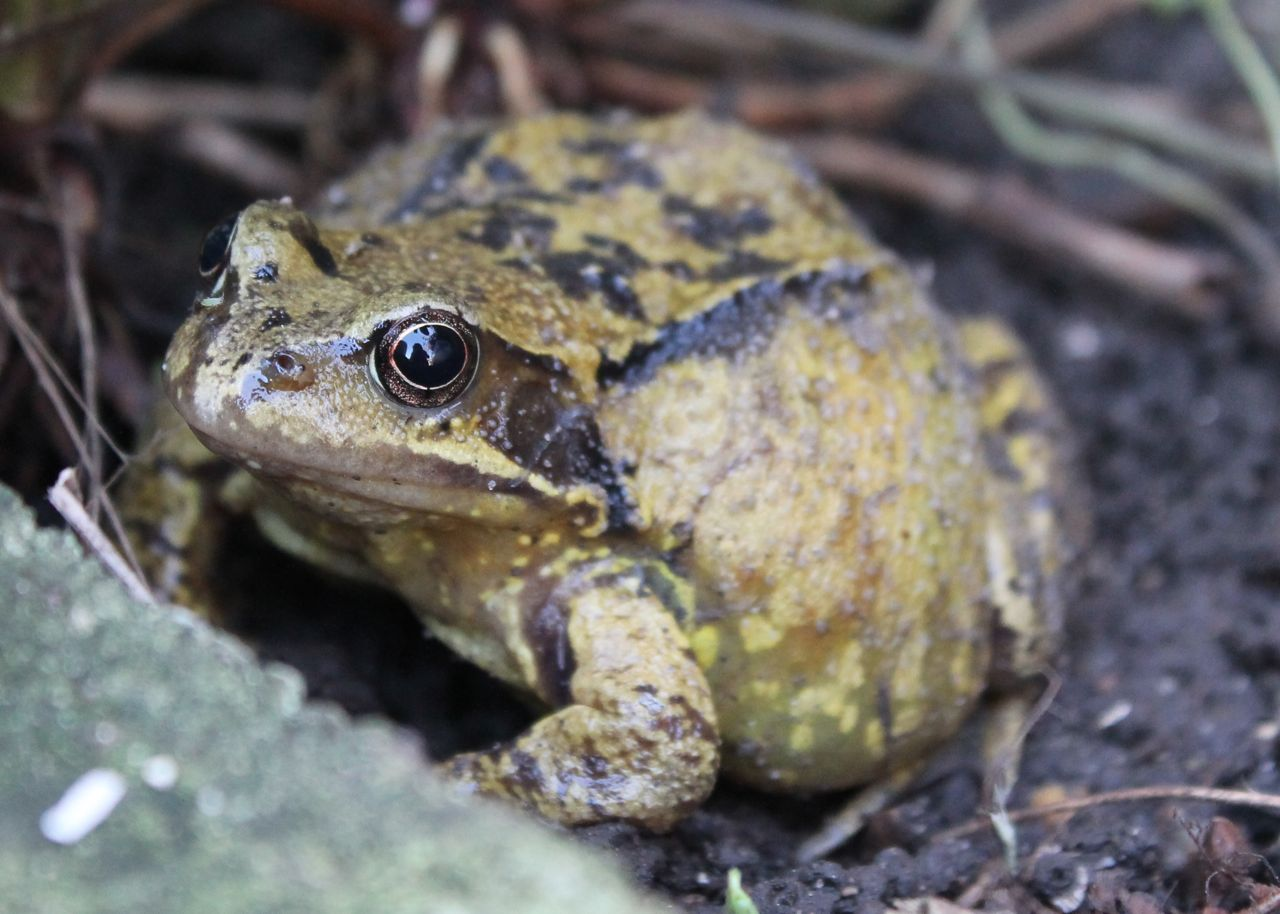 Today I am grateful for a frog in my garden Gratitude Daily